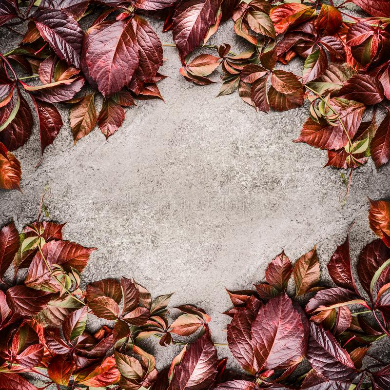 Beautiful creative red autumn leaves layout frame on gray stone background. Seasonal fall concept. Top view royalty free stock photography