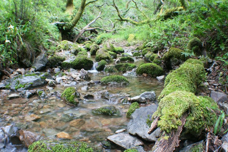 Beautiful Creek Coming To Life After Storm royalty free stock image