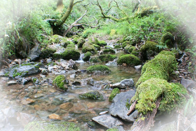 Beautiful Creek Coming To Life After Storm With White Frame. High Quality Stock Photo royalty free stock image