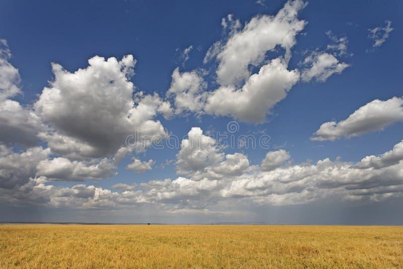 Beautiful cumulus clouds stock photography