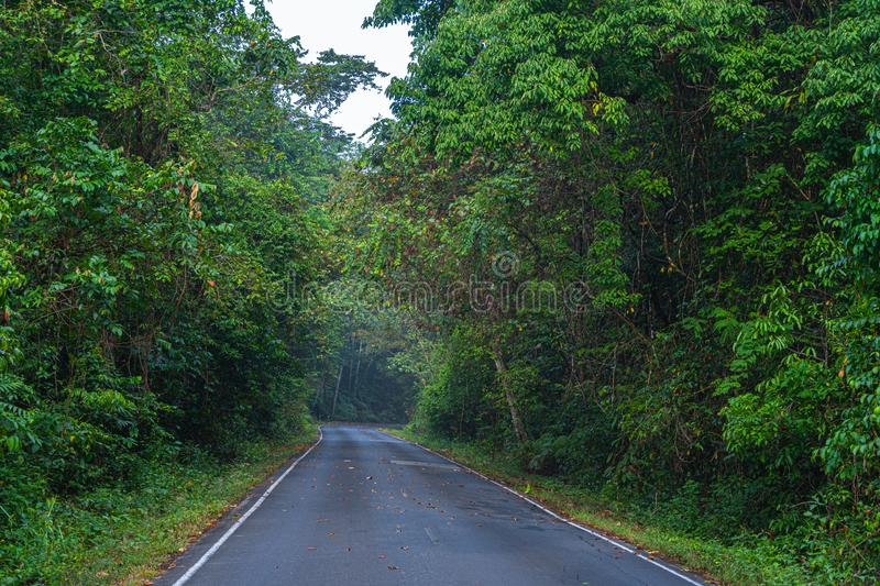 Beautiful curve road in wild forest stock images