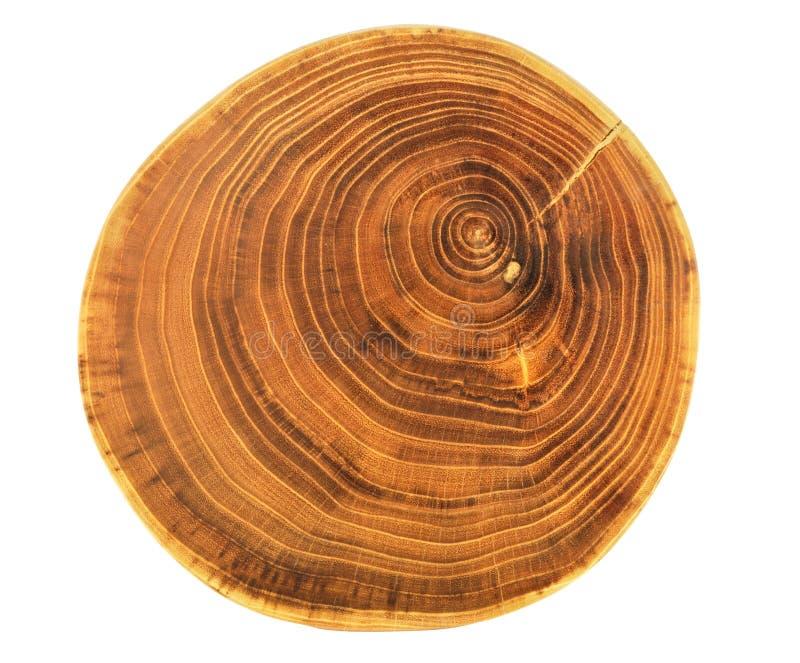 Beautiful Cut Of Tree Royalty Free Stock Image
