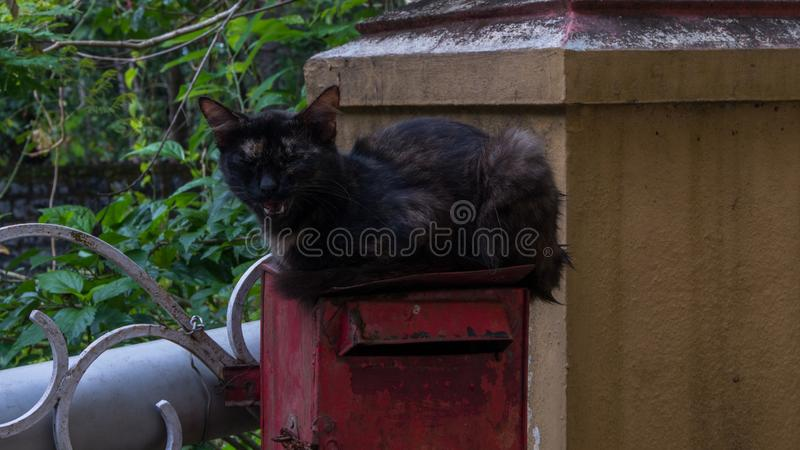 Beautiful cute black kitten cat says meow. Beautiful cute black pet kitten cat says meow sitting on top of a red post box stock photo