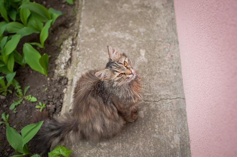 Beautiful cute cat sits and waits for food royalty free stock photo