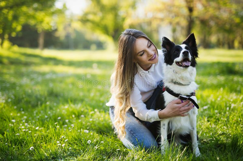 Beautiful cute dog in nature taken for walk by people royalty free stock photography