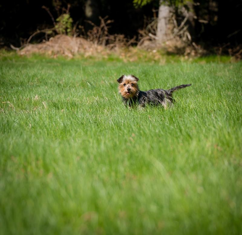 Cute dog standing in the grass and waiting for a man royalty free stock photo
