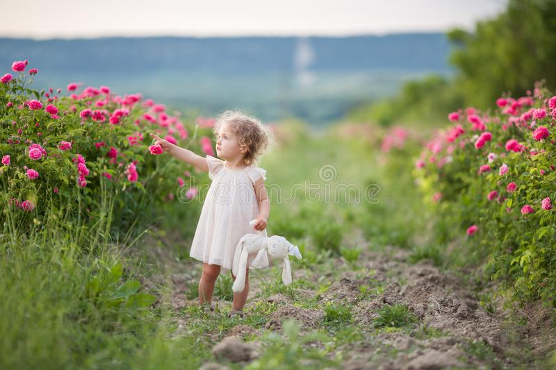 Pretty curly child girl is walking in spring garden with pink blossom roses flowers, sunset time stock photos