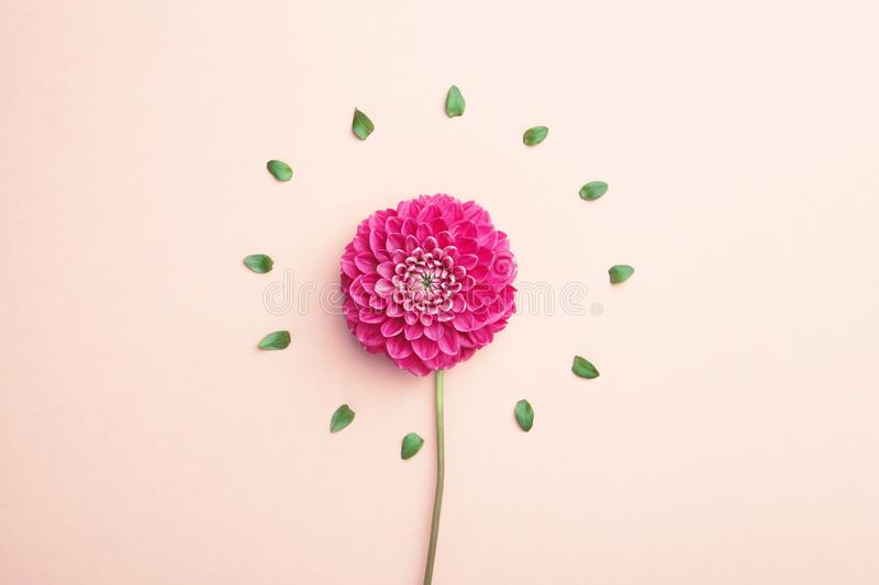 Beautiful dahlia flower royalty free stock images
