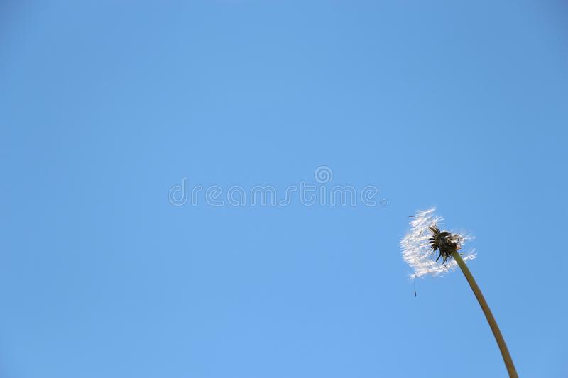 Beautiful dandelion on sky background. Summer stock photos