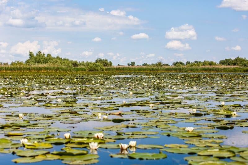 Beautiful Danube Delta stock images