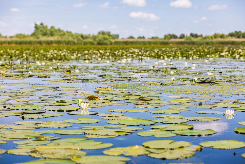 Beautiful Danube Delta royalty free stock photos