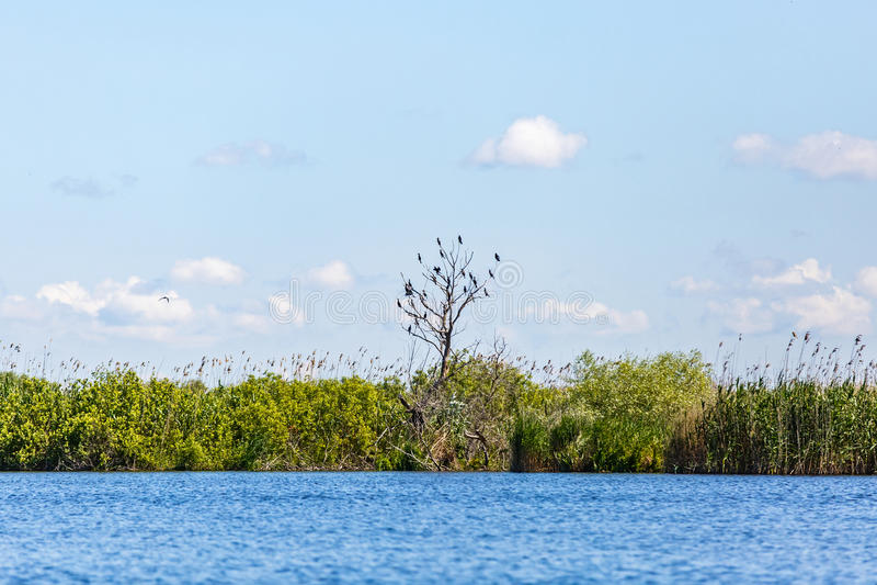 Beautiful Danube Delta stock image