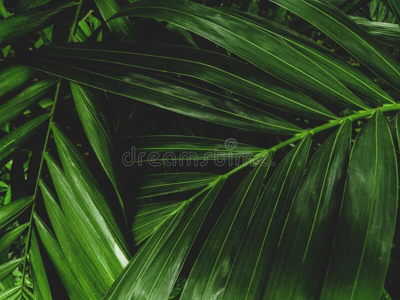 56 640 Tropical Leaves Wallpaper Photos Free Royalty Free Stock Photos From Dreamstime A collection of the top 34 tropical leaves wallpapers and backgrounds available for download for free. 56 640 tropical leaves wallpaper photos