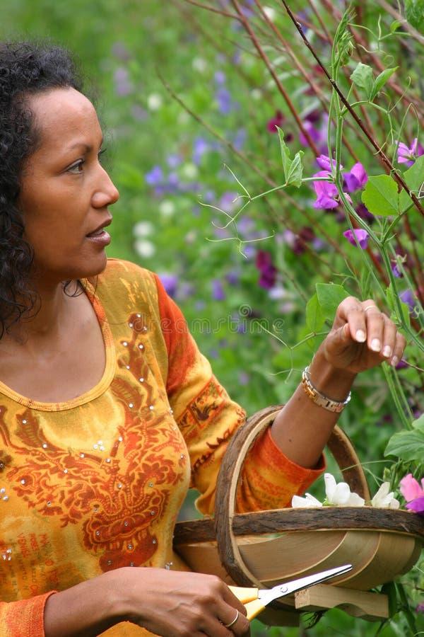 Beautiful dark woman picking flowers royalty free stock image