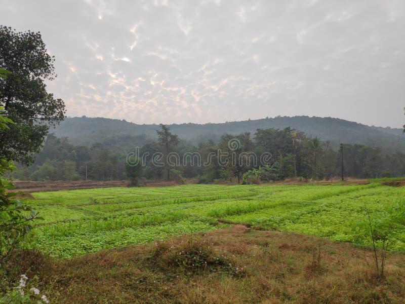 Beautiful dawn in India. in the konkan religon. Beautiful dawn in India. in the konkan region stock image