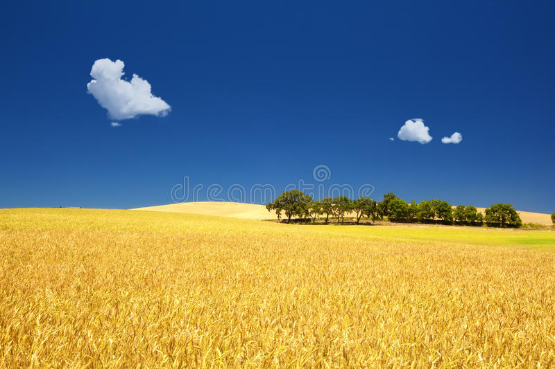 Beautiful Day stock images