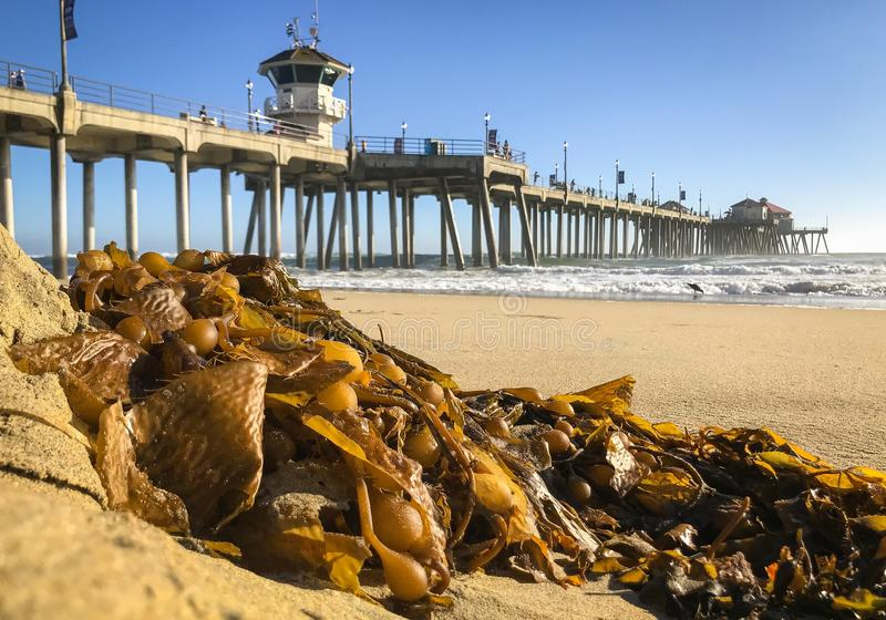Surf City, CA beach and pier along the Pacific Ocean royalty free stock photo