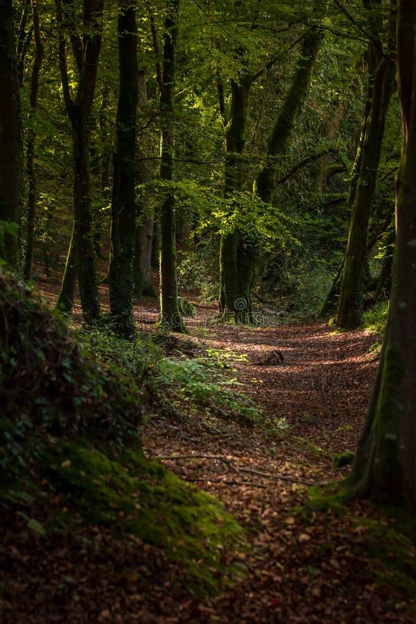 Free Beautiful Day Forest Walking Way Path Tree Foliage Autumn Cork Ireland Stock Images - 164393704