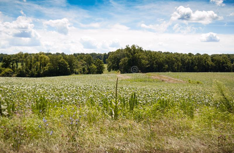 Farmed fields in the country stock photos