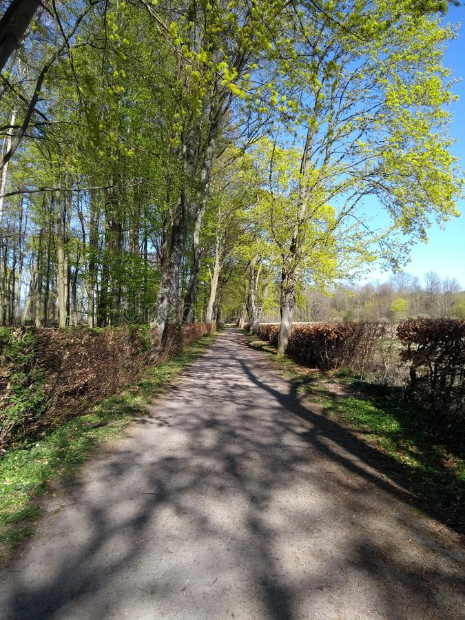 Beautiful Day in Woods. Tree, street royalty free stock photos