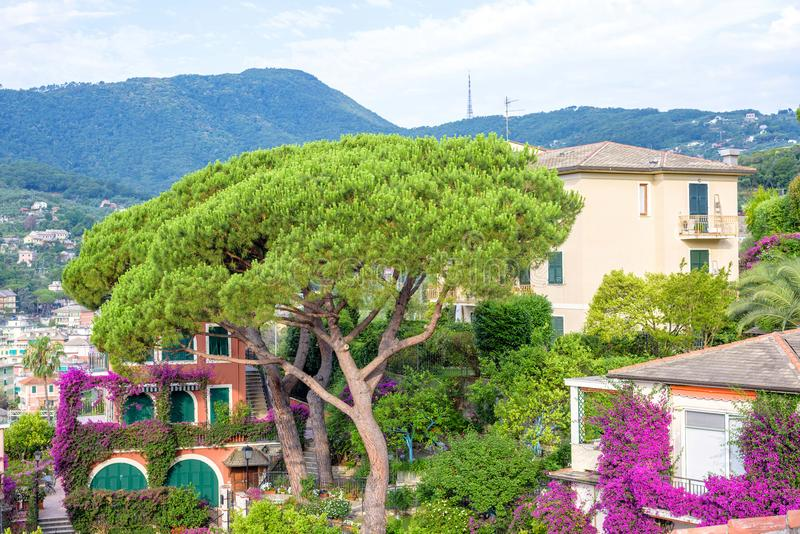 Beautiful daylight view to a green tree and Santa Margherita Lig. Ure city in Italy stock image
