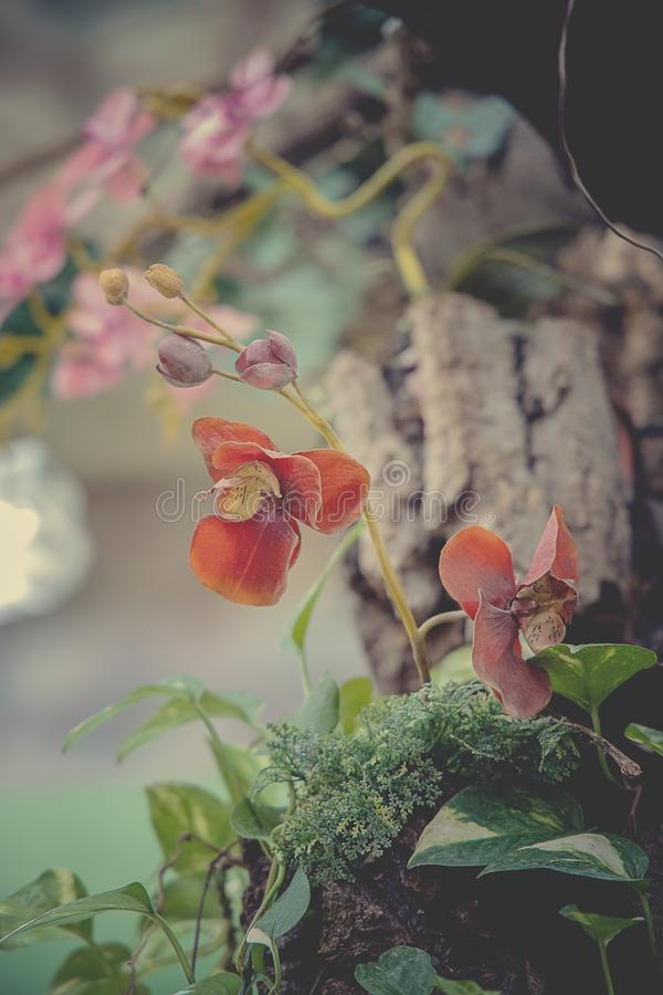 Delicate colorful orchid flower growing in natural habitat stock image