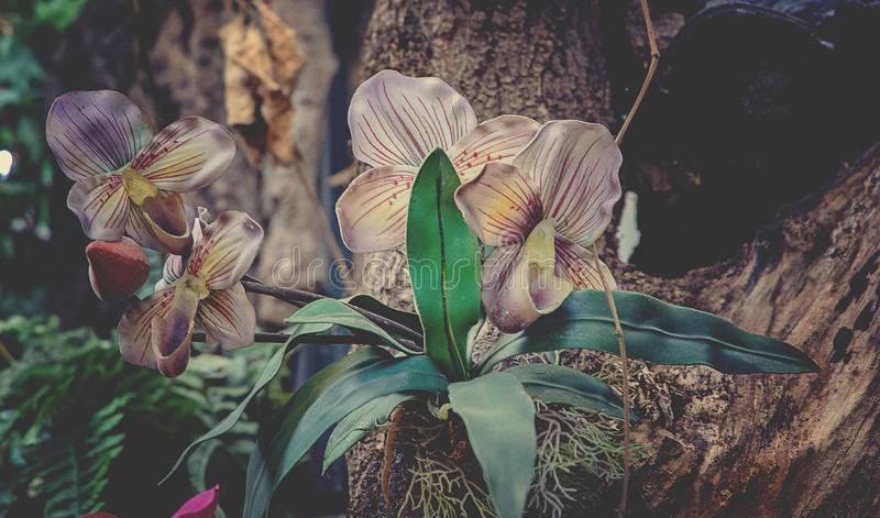 Delicate colorful orchid flower growing in natural habitat royalty free stock photos