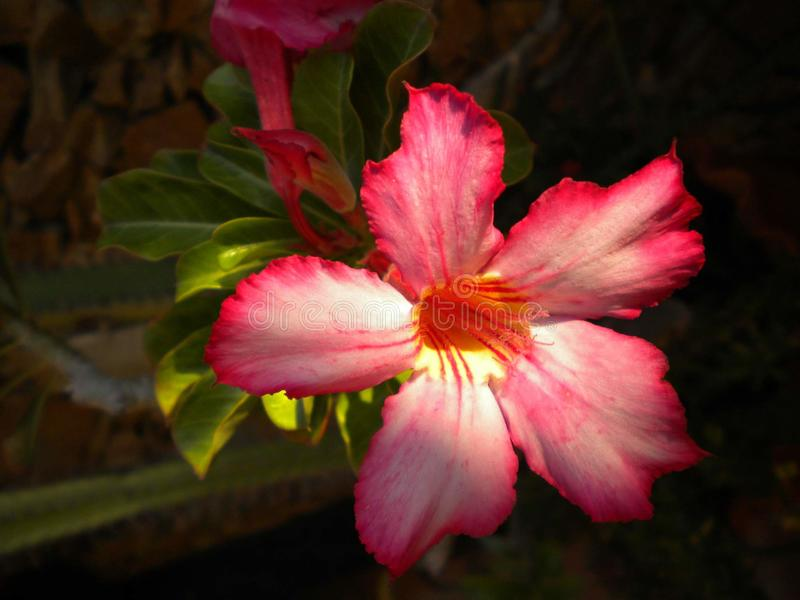 Colorfull flower over dark background royalty free stock images