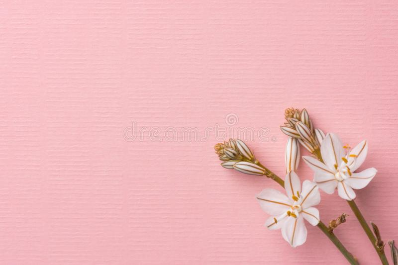 Beautiful delicate white spring flowers on linen texture light pink background. Easter womens mother`s day birthday wedding stock photo