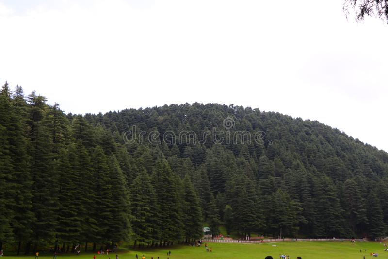 Beautiful deodar tree forest hill in Khajjair, Himachal Pradesh, India. Beautiful view royalty free stock photos