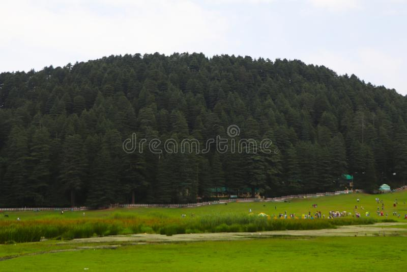 Beautiful deodar tree forest hill in Khajjair, Himachal Pradesh, India. Beautiful view royalty free stock images