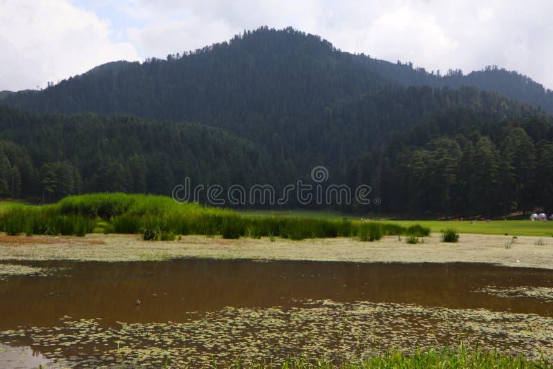 Beautiful deodar tree forest hill in Khajjair, Himachal Pradesh, India. Beautiful view royalty free stock photography
