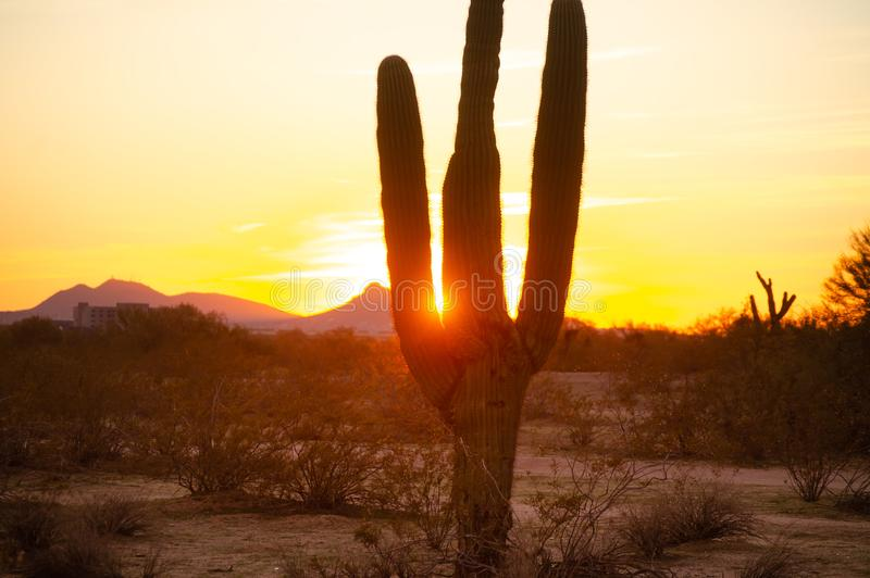 Beautiful desert sunset landscape stock image