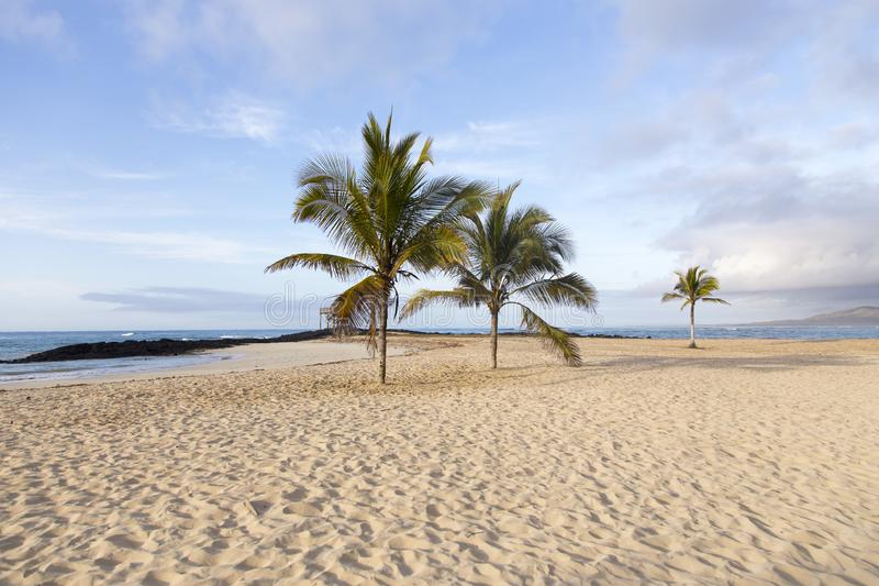 Beautiful deserted beach with coconut trees seen in the early morning royalty free stock photos