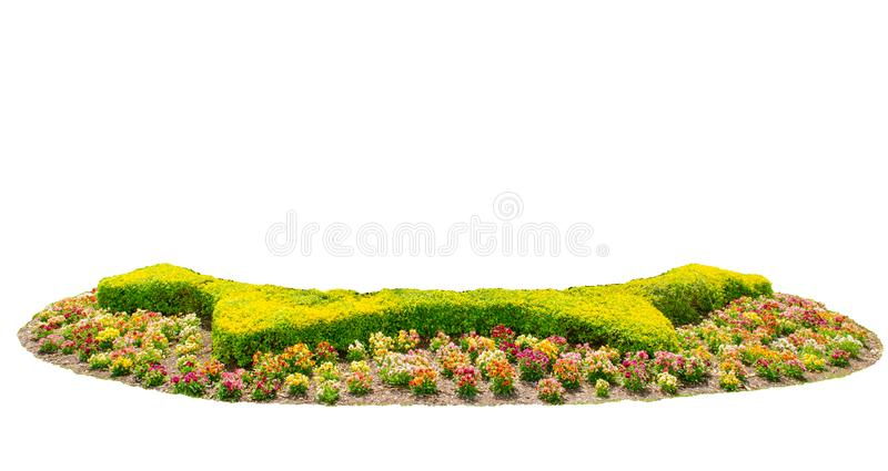 Design hedges cut green tree with colorful flowers bed isolated on white background. A beautiful Design hedges cut green tree with colorful flowers bed isolated stock image