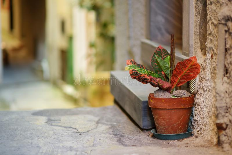 Beautiful details on the streets of Riomaggiore, the largest of the five centuries-old villages of Cinque Terre, Italian Riviera,. Beautiful details on the royalty free stock photography