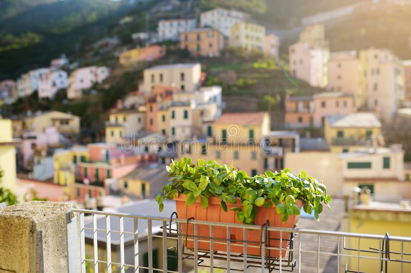 Beautiful details on the streets of Riomaggiore, the largest of the five centuries-old villages of Cinque Terre, Italian Riviera,. Beautiful details on the stock images