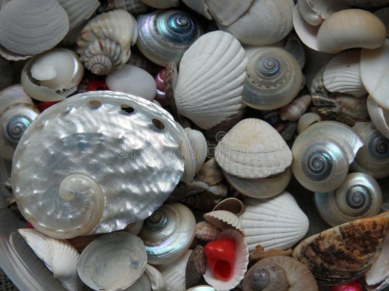 Colorful shells can use as background royalty free stock photo