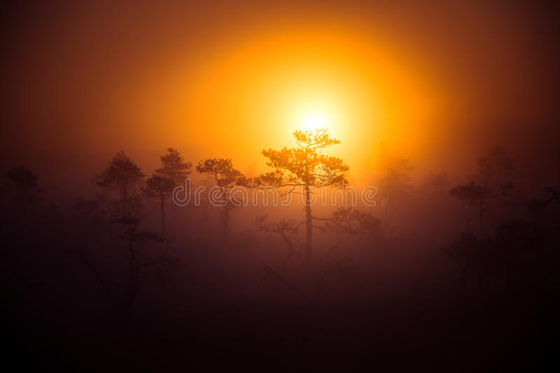 A beautiful disc of a rising sun behind the pine tree. Dark, mysterious morning landscape. Apocalyptic look. Artistic, colorful scenery royalty free stock photography