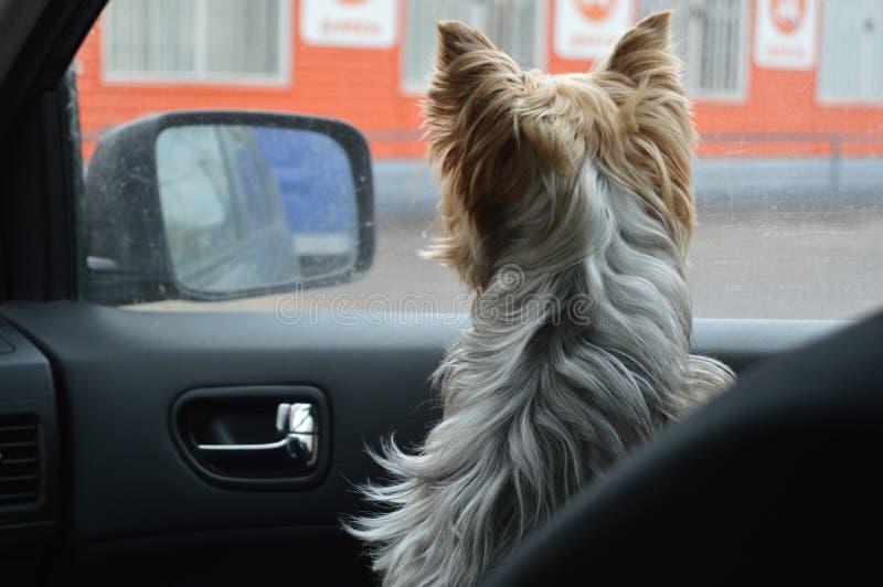 Beautiful dog behind the window royalty free stock photos