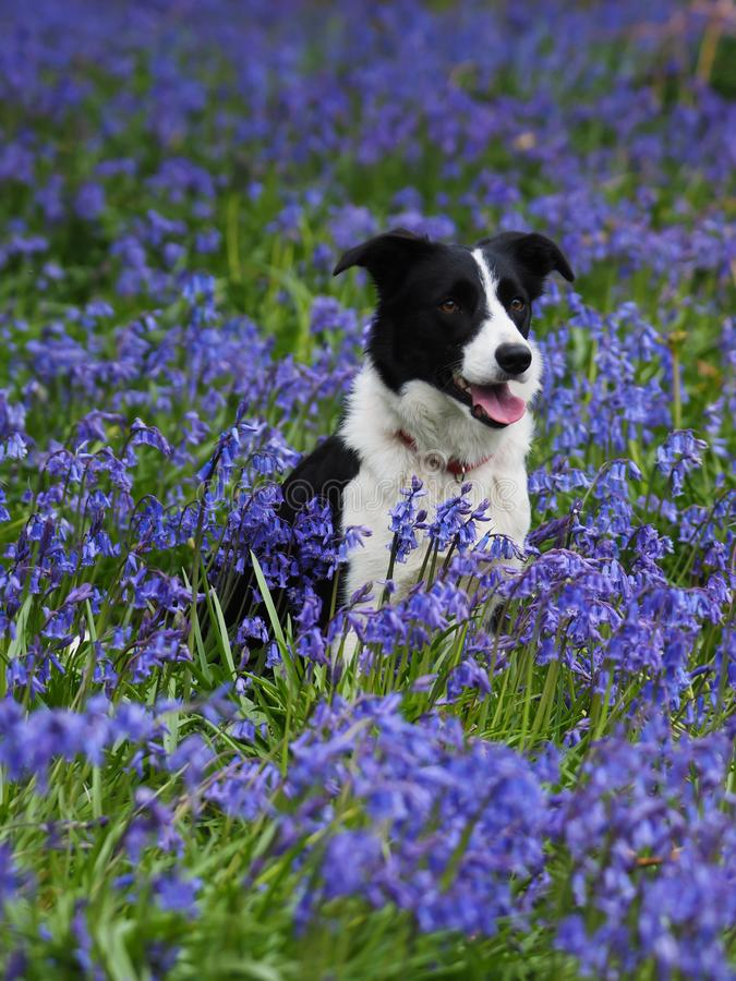 Beautiful Dog in Flowers stock photo
