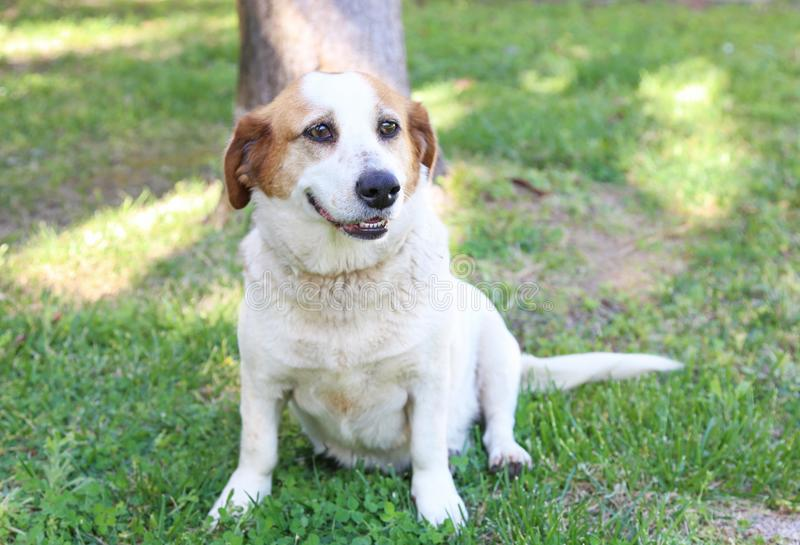 Beautiful dog sitting in the nature royalty free stock photos