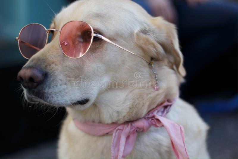 70s dog stock image