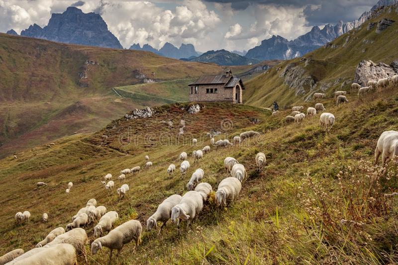 Dolomites sheep herd stock photo