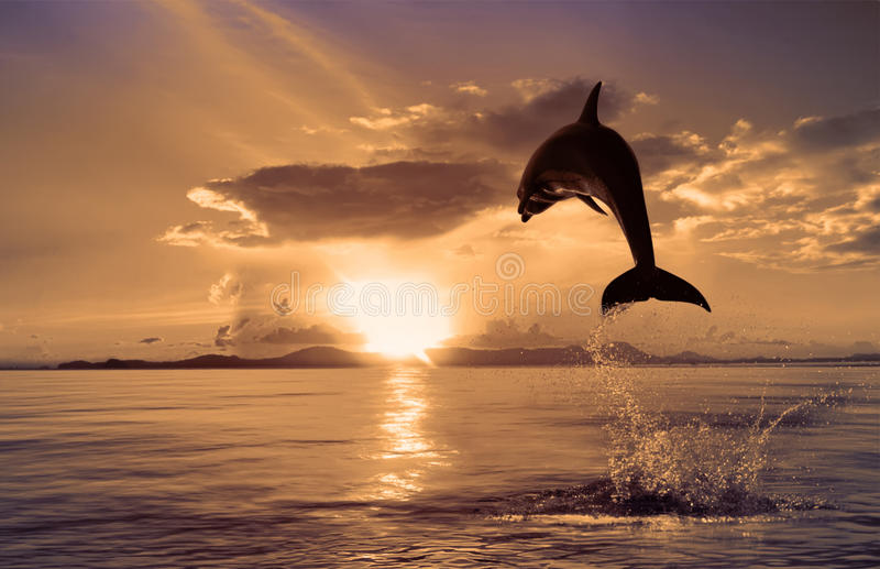 Beautiful dolphin jumping from shining water royalty free stock images