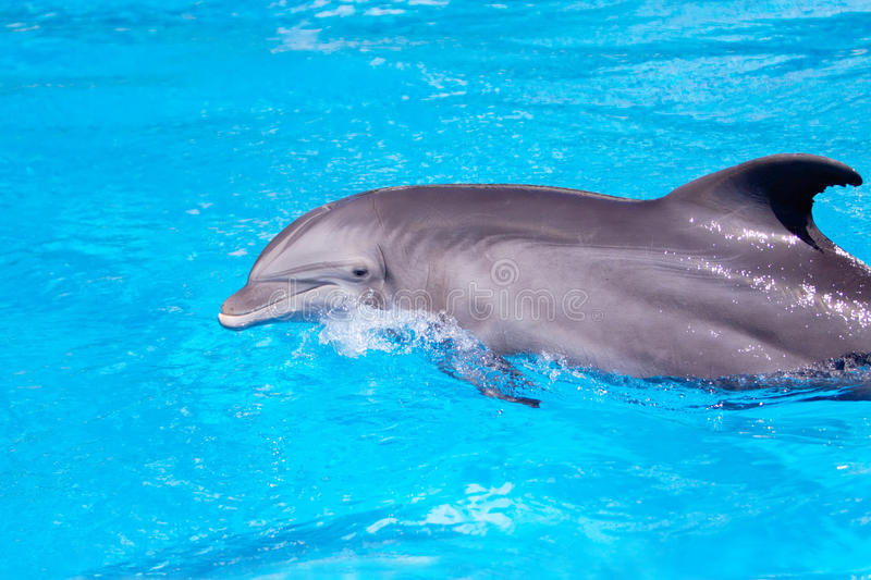 Beautiful dolphin in the water stock photography