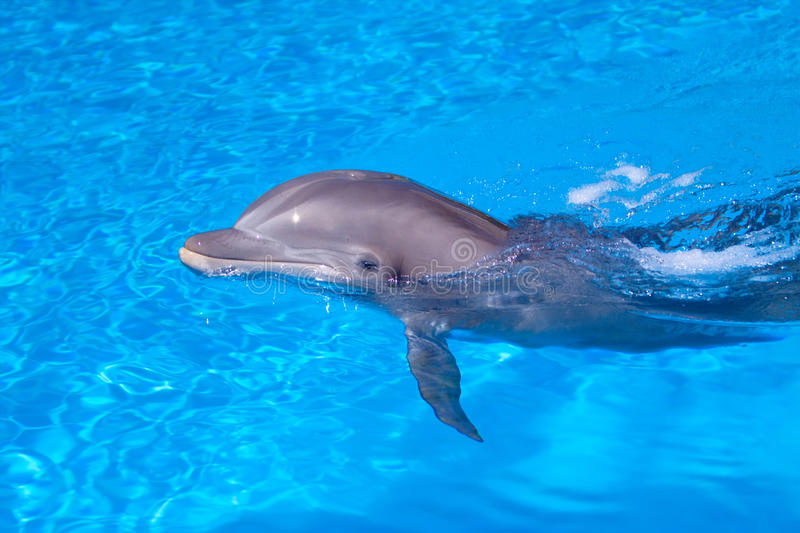 Beautiful dolphin in the water royalty free stock photo