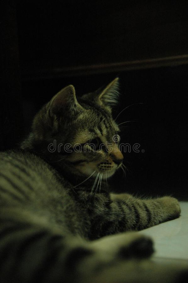 Beautiful domestic cat so cute - adorable animal stock photos