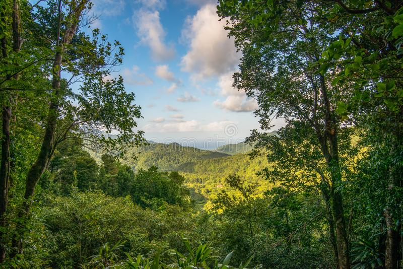 Beautiful Dominica mountain forest landscape taken before Hurricane Maria destruction - Nature Island royalty free stock image
