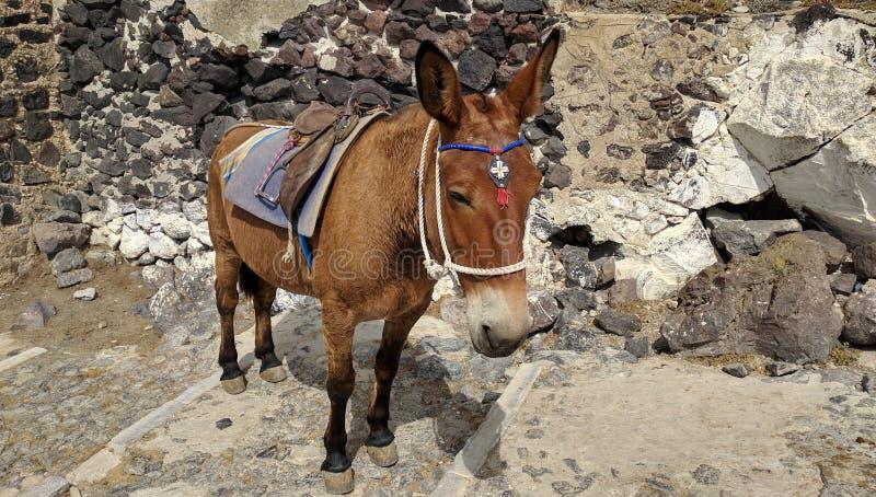 Beautiful Donkey royalty free stock photo